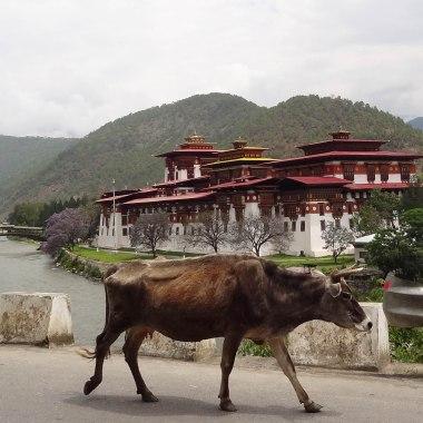 Bhutan-05688