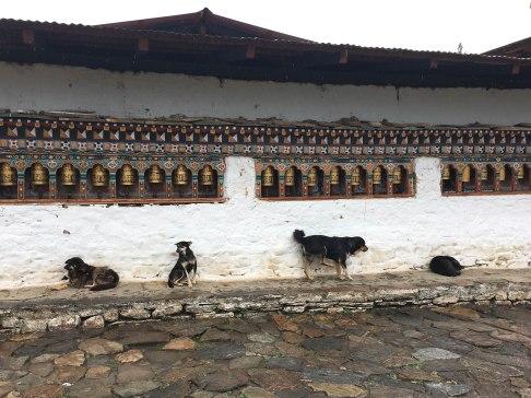 Bhutan-4573