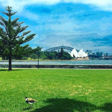 Sydney-3368